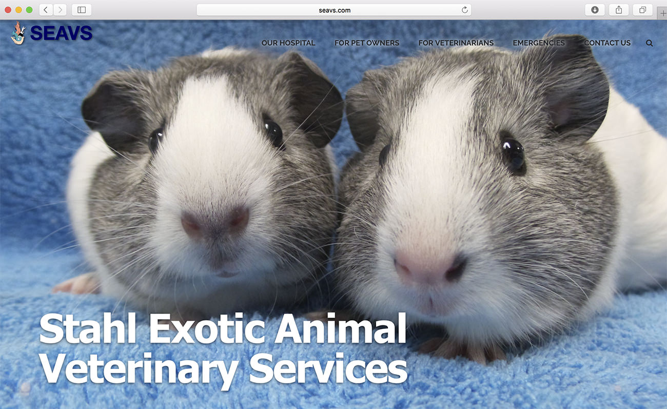 Specialization exotic animals - Marketing for veterinary clinics