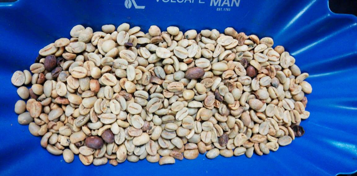 Plan de Digitalización El Salvador. Coffee Dog, café antes de molerse