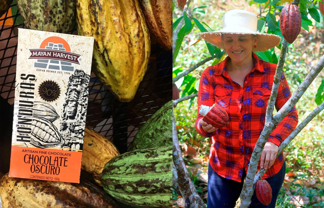 Mayan Harvest. Featured.