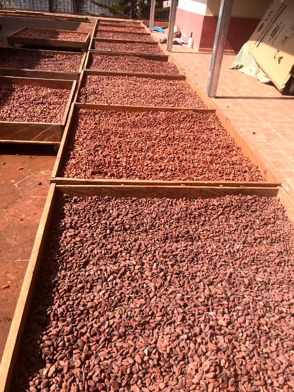 Cacao de cultivo orgánico de Mayan Harvest.